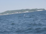 目的地の保田港が近づいてきました。